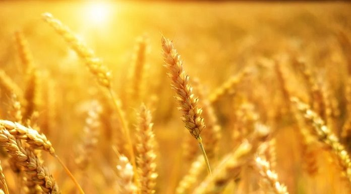 Perdagangan Komoditas Pertanian Berbasis Blockchain
