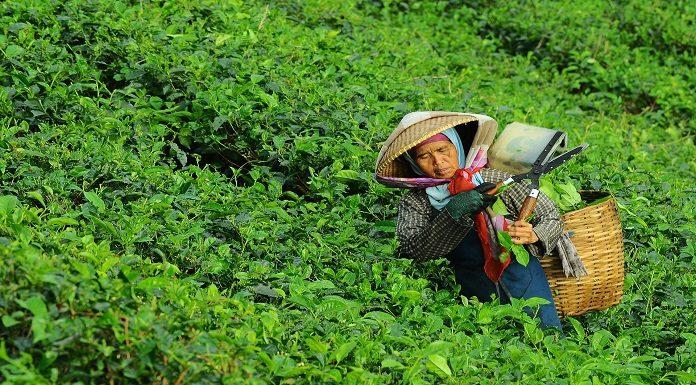 digitalisasi 100 ribu petani